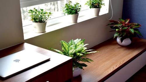 Green plants in the one bedroom apartment